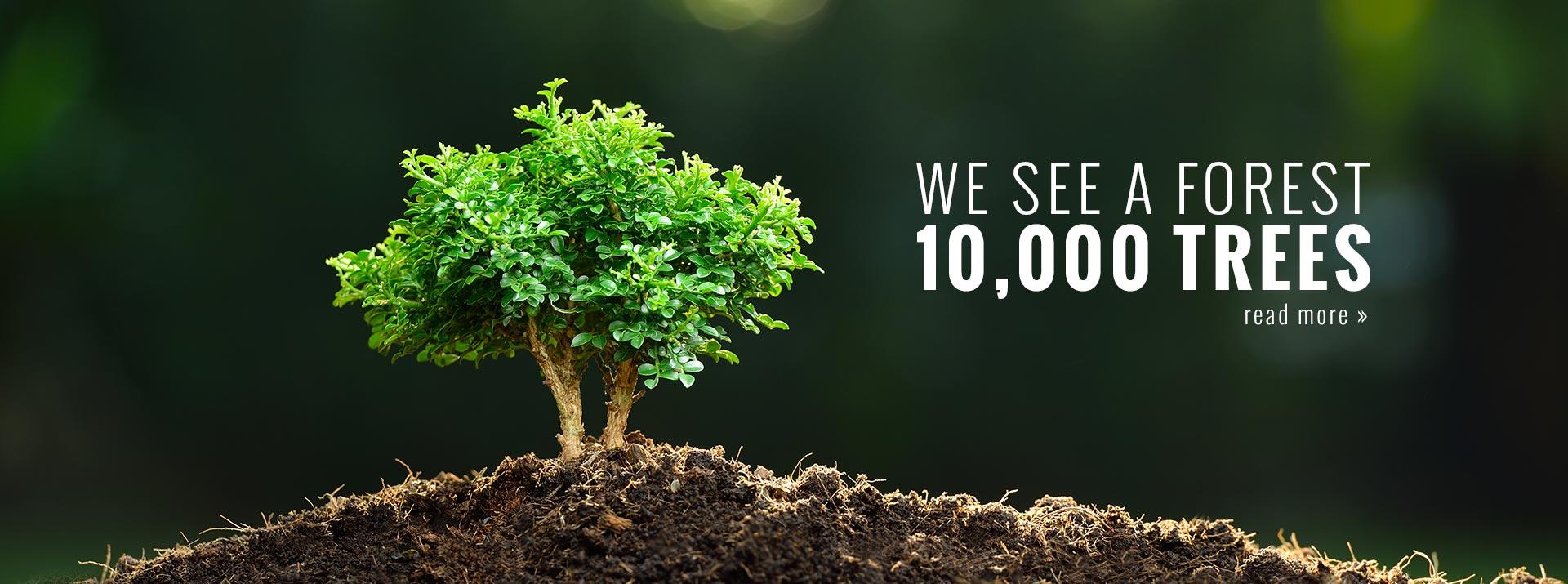 10,000 Trees